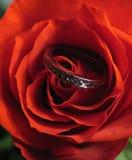 кольцо Стоковые Фото