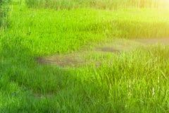 Колючая проволока на загородке, старый ржавый провод стоковое изображение rf