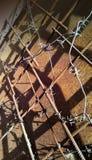 Колючая проволока на подкреплении металла на предпосылке ржавого утюга стоковая фотография rf