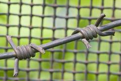 колючий провод металла решетки Стоковые Изображения