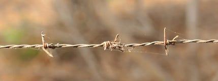 колючий провод ржавчины Стоковое Изображение RF