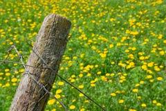 колючий провод цветков Стоковая Фотография RF