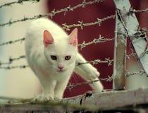колючим провод вставленный котом Стоковые Фотографии RF