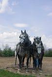 команда лошади проекта серая Стоковая Фотография