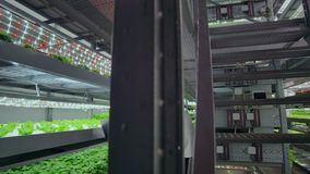 Команда ученых исследует овощи, который выросли в вертикальных фермах используя компьютеры и планшеты Ферма овоща  акции видеоматериалы