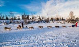 Команда 2016 собаки поисков Юкона Стоковые Изображения RF