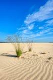 2 комка пурпура причаливают траву в desertlike широком пространстве Стоковые Изображения RF