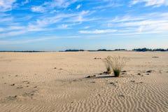 2 комка травы в desertlike широком пространстве Стоковые Изображения RF