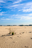 2 комка травы в desertlike широком пространстве Стоковое Изображение