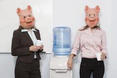 Коммерсантка 2 в масках свиньи на водяном охлаждении стоковые изображения