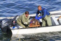 Коммерчески атлантические канадские жатки рыб собирая атлантического омара Стоковые Фотографии RF