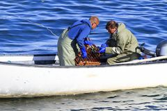 Коммерчески атлантические канадские жатки рыб собирая атлантического омара Стоковое Изображение