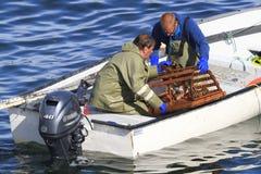 Коммерчески атлантические канадские жатки рыб собирая атлантического омара Стоковая Фотография