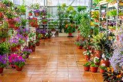 Коммерчески магазин парника продавая цветки и заводы в цветочных горшках Зеленое дело стоковая фотография rf