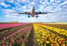 Коммерчески самолет и тюльпаны Стоковое фото RF