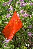 Коммунистический флаг стоковая фотография