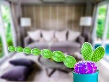 комната зеленого шарика руки кактуса длинного фиолетового живущая Стоковое Изображение