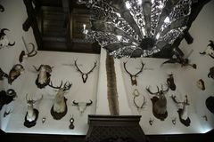 Комната охотника трофея в Nanosi, БЕЛАРУСИ Комната с трофеями охотника заполнила дикие животных стоковые фото