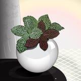 Комнатное растение в овальном баке иллюстрация штока