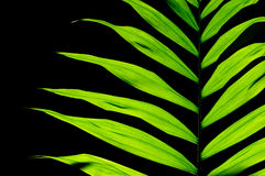 Комнатное растение лист Стоковая Фотография