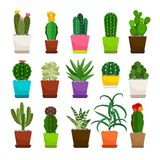 Комнатные растения кактуса в установленных цветочных горшках Стоковые Изображения