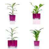 Комнатные растения стоковое фото rf