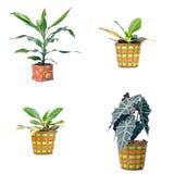 Комнатные растения стоковое изображение rf