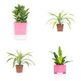 Комнатные растения стоковые изображения
