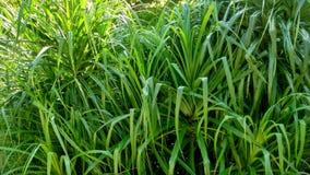 Комок листьев стоковое изображение rf
