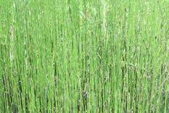 Комок никакой травы листьев стоковые изображения