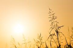Комок силуэта травы стоковые изображения