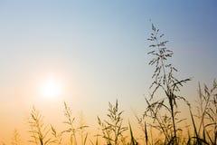 Комок силуэта травы стоковые фотографии rf