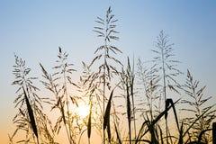 Комок силуэта травы стоковое изображение rf