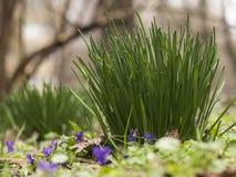 комок травы и голубых цветков стоковая фотография rf
