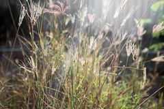 Комок травы стоковые фотографии rf