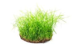 Комок травы стоковые фото