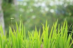 Комок травы стоковая фотография
