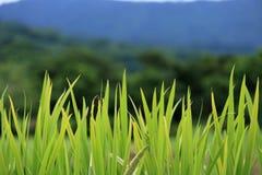 Комок травы стоковое фото rf