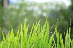 Комок травы стоковое изображение rf