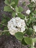 Комок цветков Стоковое Изображение