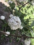 Комок цветков Стоковые Изображения