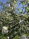 Комок цветков Стоковые Фотографии RF