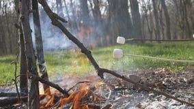 Компания отдыхает в природе Зефиры жаркого на огне в древесинах после обеда Руки и ручки с зефиром внутри акции видеоматериалы