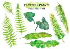 Комплект акварели тропический с листьями папоротника, coconat, банана и лианы Стоковое Изображение