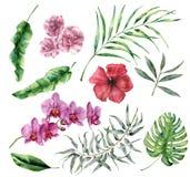 Комплект акварели тропический с цветками и листьями Вручите покрашенную ладонь, monstera, гибискус, орхидею, олеандр, евкалипт Стоковое Изображение