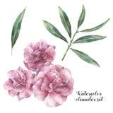 Комплект акварели флористический Вручите покрашенные цветки олеандра при листья и ветвь изолированные на белой предпосылке средст Стоковая Фотография RF