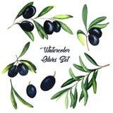 Комплект акварели черных оливок и завтрак-обедов иллюстрация вектора