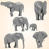 Комплект африканских слонов и слона младенца Стоковая Фотография RF