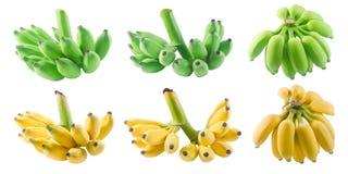 Комплект банана приносить на белой предпосылке Стоковые Изображения RF