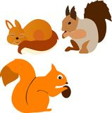 Комплект белок которые едят гайку и спят redheads бесплатная иллюстрация